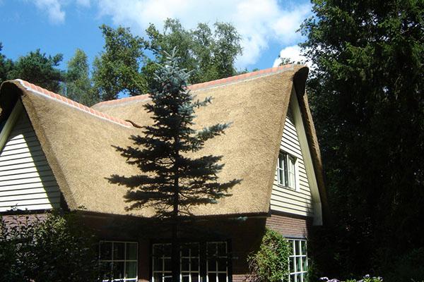 Vervangen rieten dak landhuis rietdekkersbedrijf e eiland